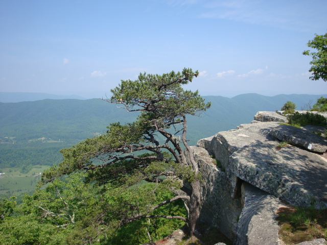 Roanoke (VA) United States  city pictures gallery : ... Cliffs Hiking trail near Roanoke, Virginia, United States Pictures